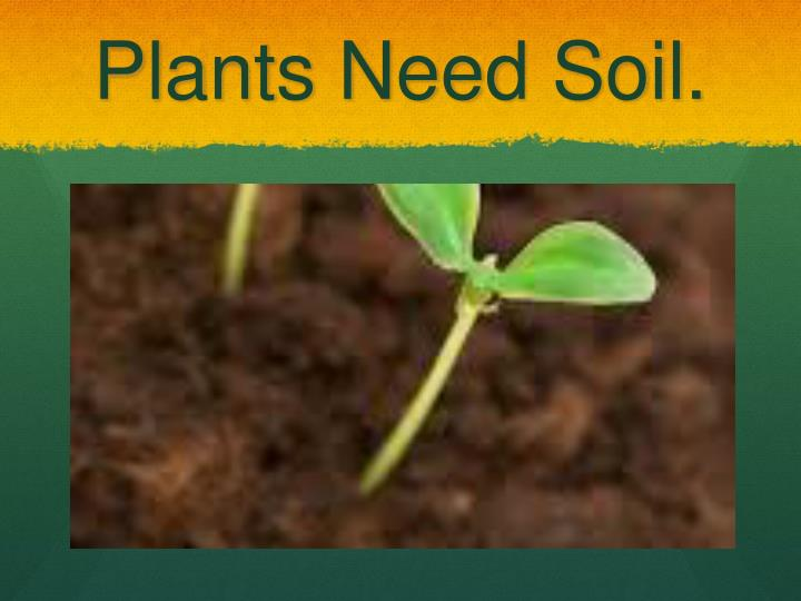 Plants Need Soil.