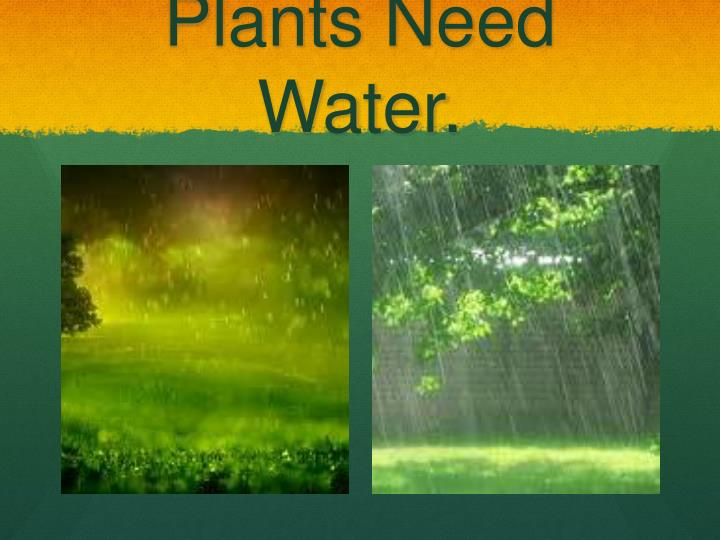 Plants need water