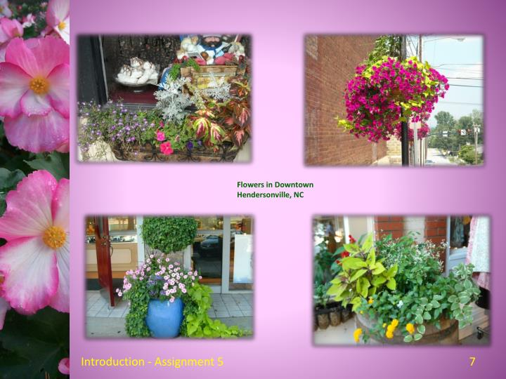 Flowers in Downtown Hendersonville, NC