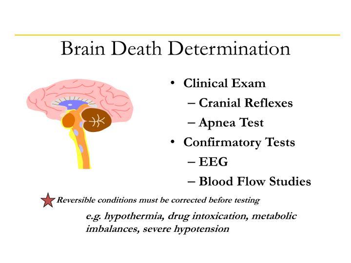 Brain Death Determination