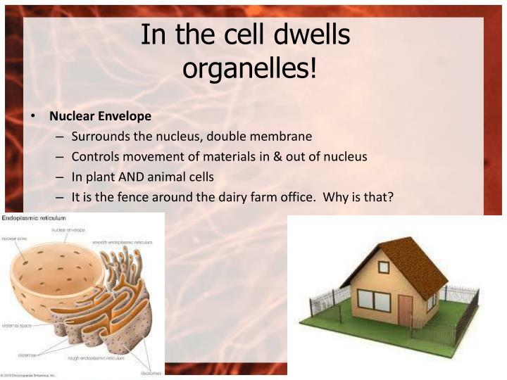 In the cell dwells organelles!