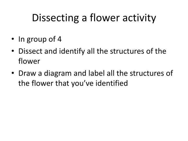 Dissecting a flower activity