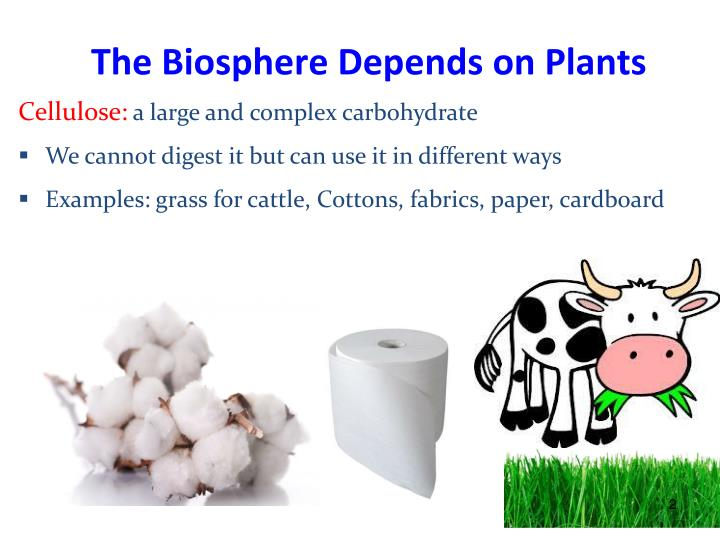 The Biosphere Depends on Plants