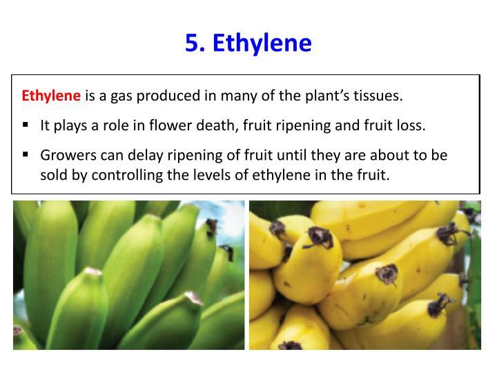 5. Ethylene