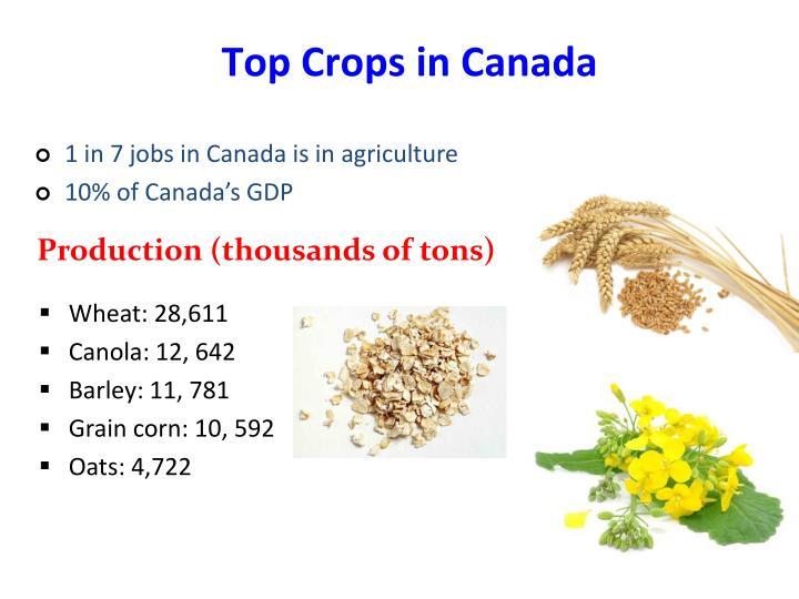 Wheat: 28,611