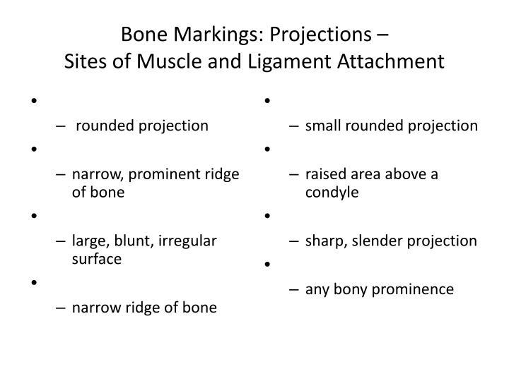 Bone Markings: Projections –