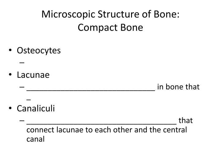 Microscopic Structure of Bone: