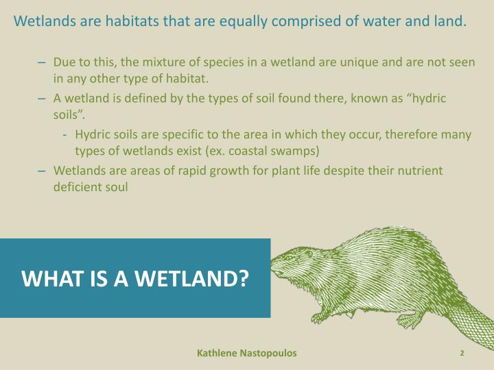Wetlands are habitats that are equally comprised of water and land.