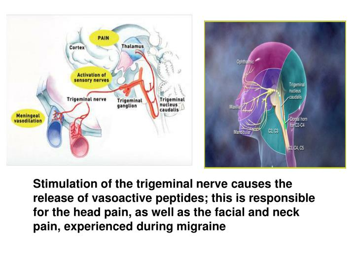 Stimulation of the trigeminal nerve causes the release of