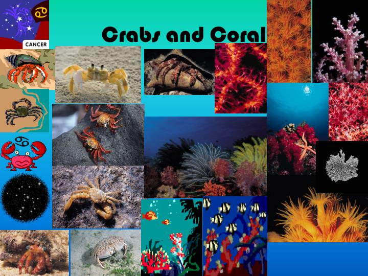 Crabs and Coral
