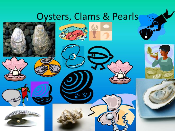 Oysters, Clams & Pearls