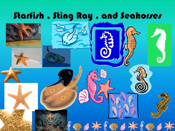 Starfish , Sting Ray , and Seahorses