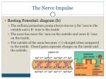 the nerve impulse4