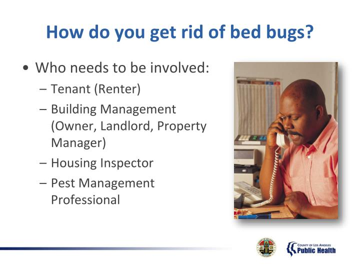 How do you get rid of bed bugs?