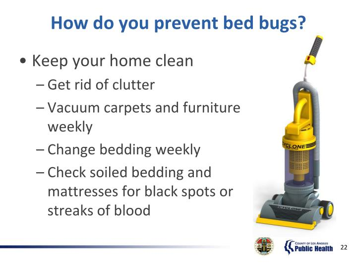 How do you prevent bed bugs?