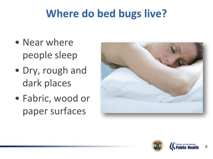 Where do bed bugs live?