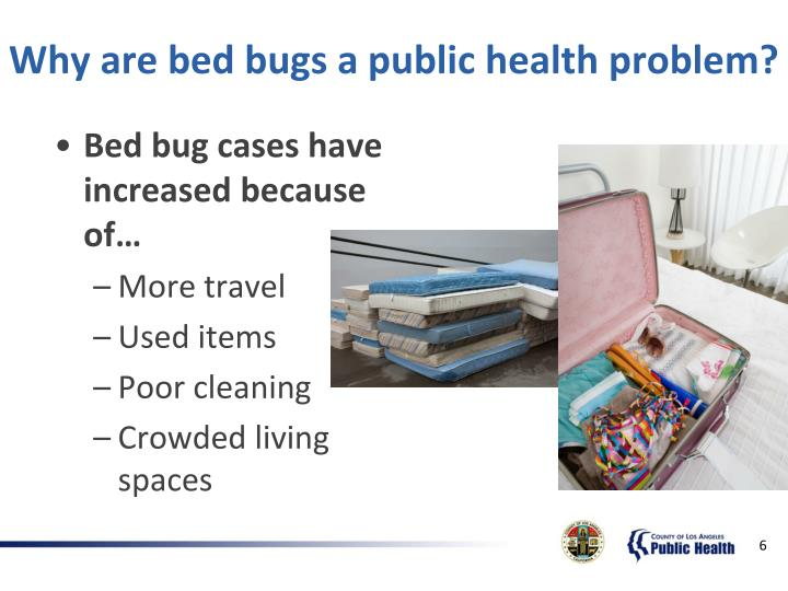 Why are bed bugs a public health problem?