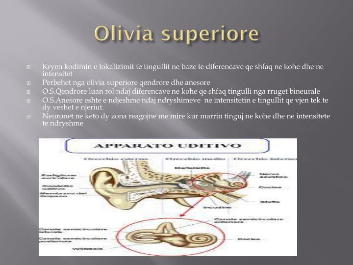Olivia superiore