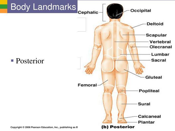 Body Landmarks