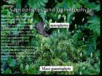 saprophytes and gametophyte