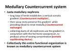 medullary countercurrent system