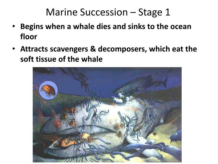 Marine Succession – Stage 1