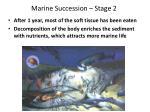 marine succession stage 2