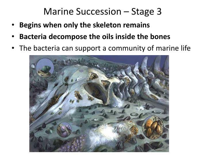 Marine Succession – Stage 3