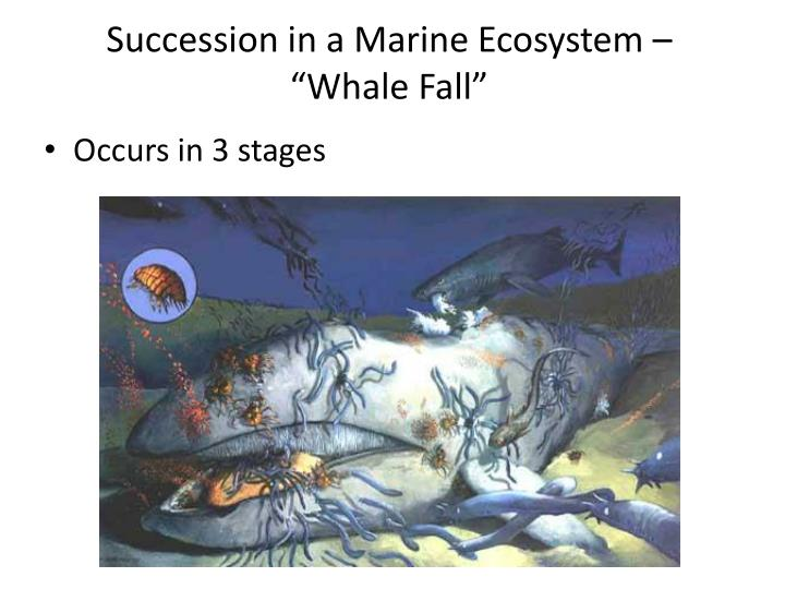 "Succession in a Marine Ecosystem – ""Whale Fall"""