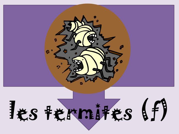 les termites (f)