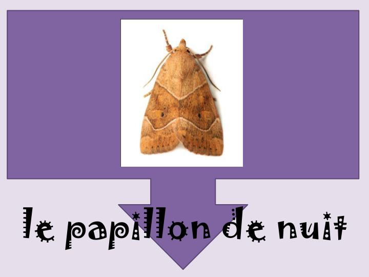 le papillon de nuit