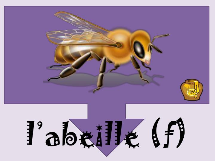 l'abeille (f)