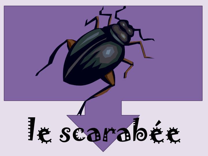 le scarabée