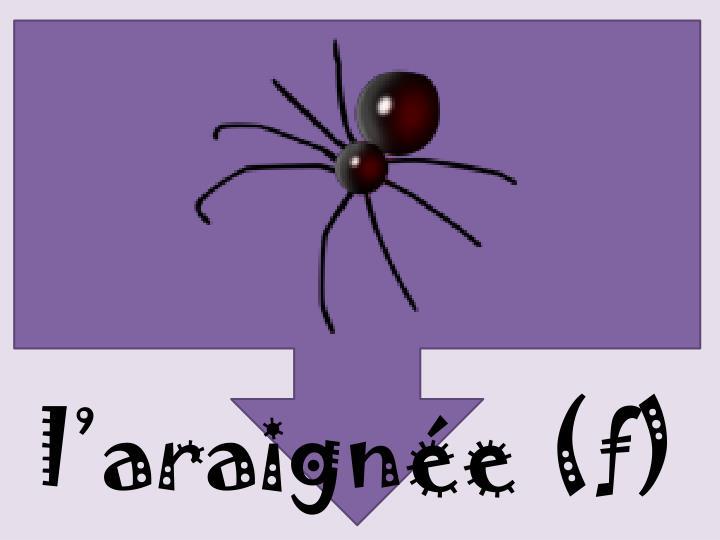 l'araignée (f)