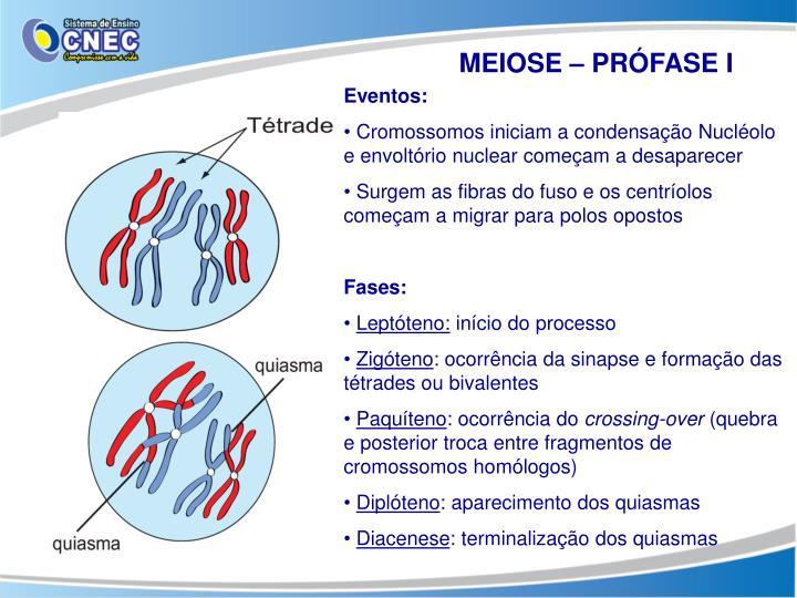 MEIOSE – PRÓFASE I