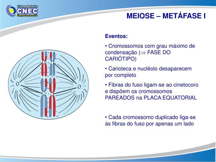 MEIOSE – METÁFASE I