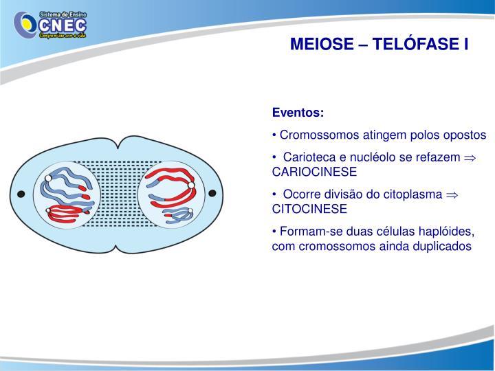MEIOSE – TELÓFASE I