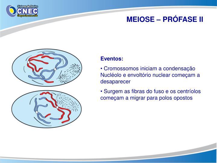 MEIOSE – PRÓFASE II
