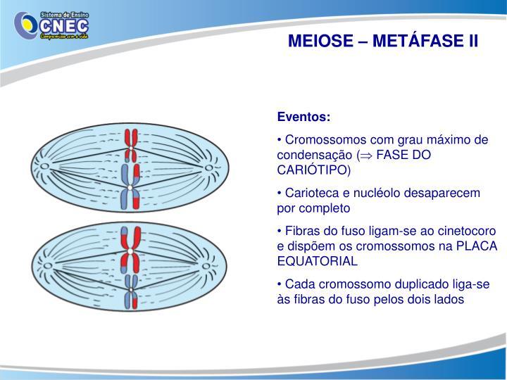 MEIOSE – METÁFASE II
