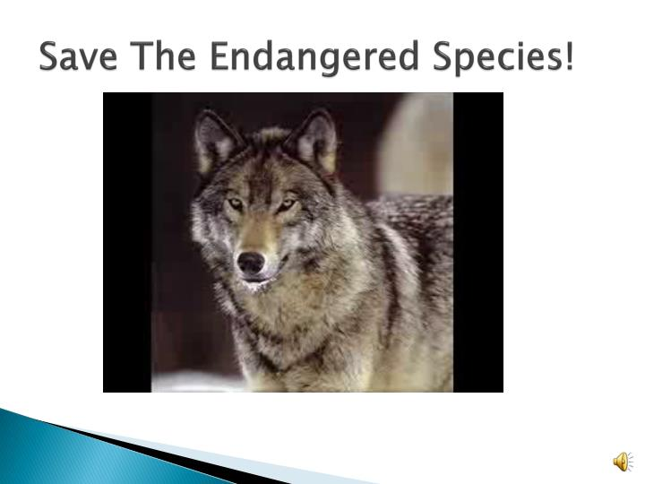 Save The Endangered Species!
