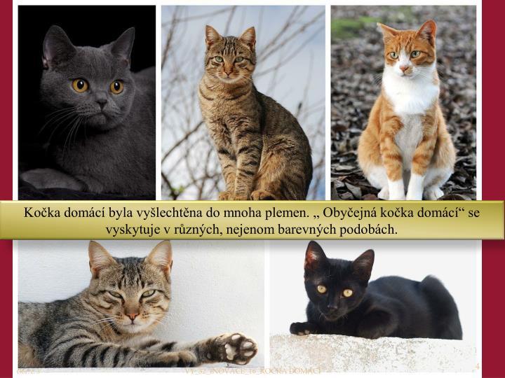 """Kočka domácí byla vyšlechtěna do mnoha plemen. """" Obyčejná kočka domácí"""" se vyskytuje v různých, nejenom barevných podobách."""