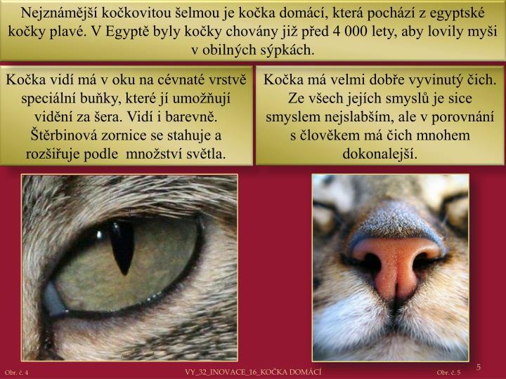 Nejznámější kočkovitou šelmou je kočka domácí, která pochází z egyptské kočky plavé. V Egyptě byly kočky chovány již před 4 000 lety, aby lovily myši v obilných sýpkách.
