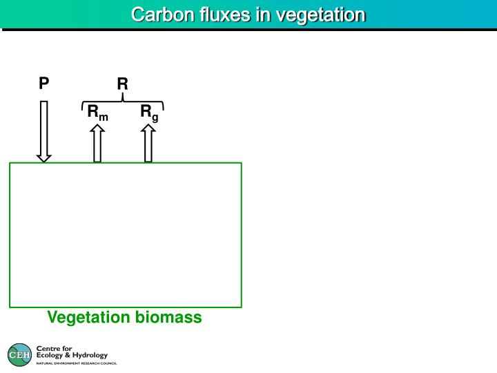 Carbon fluxes in vegetation