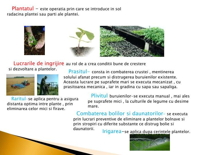 Plantatul