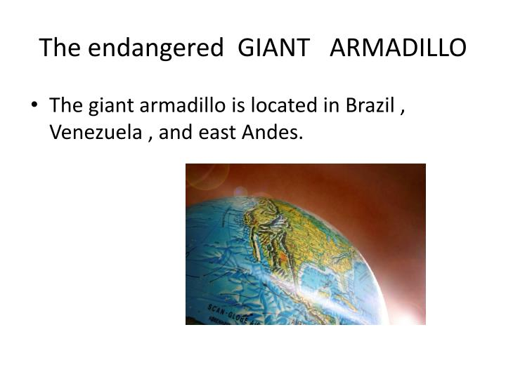 The endangered giant armadillo2