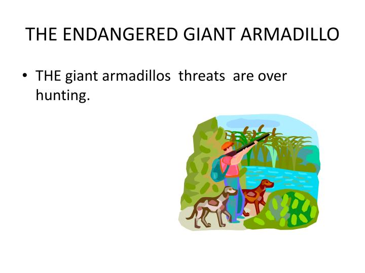 THE ENDANGERED GIANT ARMADILLO