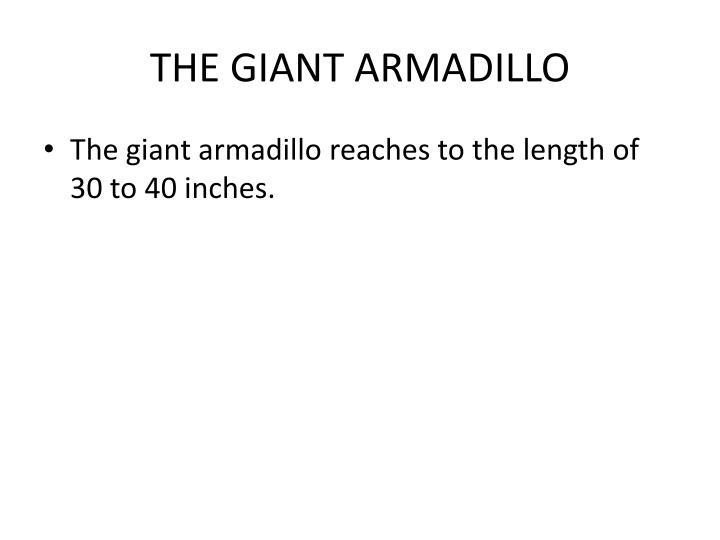 THE GIANT ARMADILLO