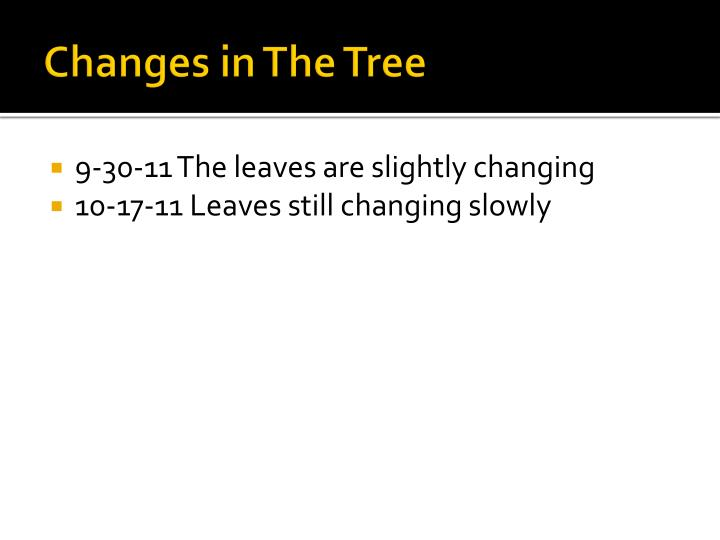 Changes in The Tree