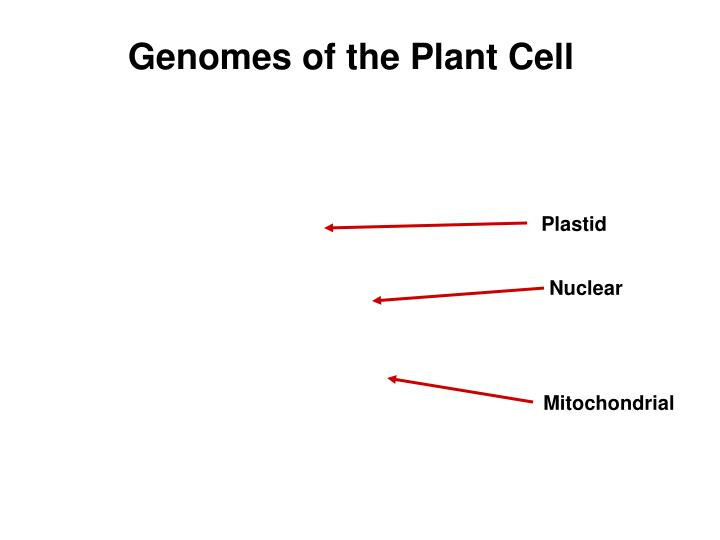 Genomes of the Plant Cell