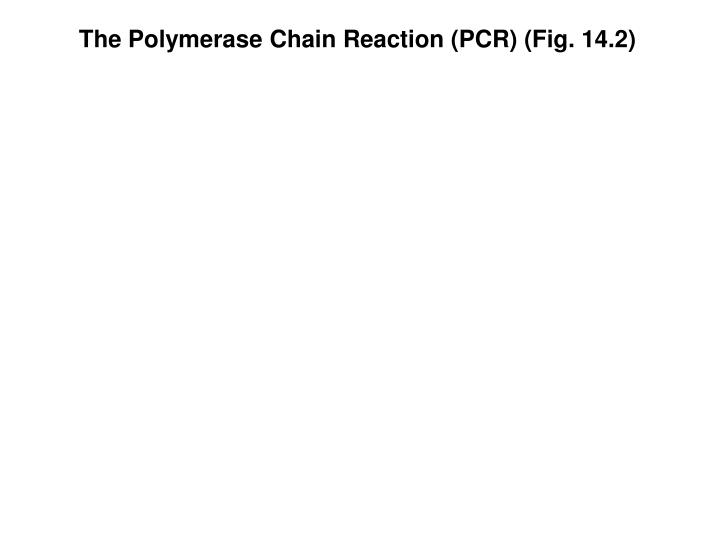 The Polymerase Chain Reaction (PCR) (Fig. 14.2)